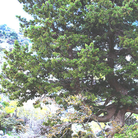 Cypress1(js)