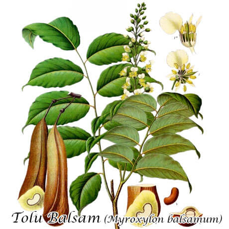 トルーバルサム(Tolu Balsam)